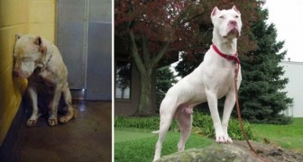 These beautiful images of dogs before and after adoption will put you at peace with the world