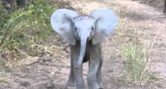 O elefantinho corajoso