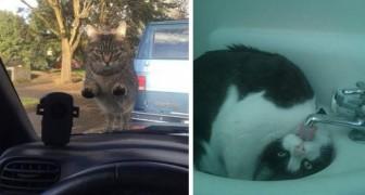 20 lustige Fotos von Katzen, die dich sofort zum Lächeln bringen werden
