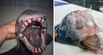 A Russian fisherman photographs the strangest creatures he has found and what he shows looks like a horror film!