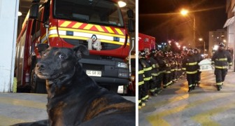 A fire station dog passes away and the farewell given to him by his colleagues will bring tears to your eyes!