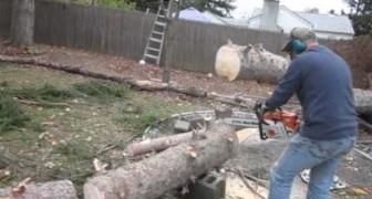 Ein Mann sägt einen Baumstamm, aber er erwartete sicherlich nicht diese Reaktion