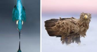 All die Grazie und Eleganz der Vögel in einer Sammlung wunderbarer Bilder
