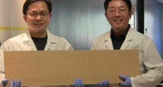 Des chercheurs développent le super-bois : plus dur que l'acier et capable d'arrêter les balles