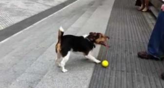 Schlaue Hunde spielen auch ganz alleine