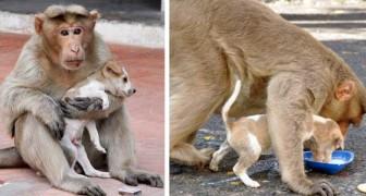 Ce singe a adopté un chien errant, et la façon dont il en prend soin dépasse tout ce qu'on peut imaginer.