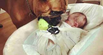 De manier waarop deze hond voor zijn kleine baasje zorgt, zul je aandoenlijk vinden