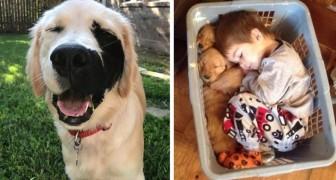 26 Situationen, in denen Golden Retriever bewiesen haben, die besten Hunde der Welt zu sein