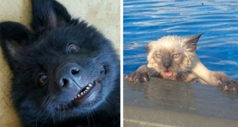 23 funny photos that show that animals are nothing but humans with skin covered with fur!
