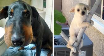 27 Hunde, die eine schlechte Wahl getroffen haben