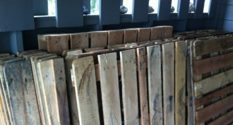 These wooden pallets were to be thrown away, but a family had a brilliant idea and got excellent results!