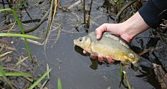Une étude tire la sonnette d'alarme : les rivières sont pleines de déchets pharmacologiques