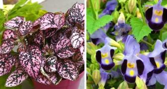 10 plantes qui pousseront abondamment même dans le coin le plus sombre de votre maison.