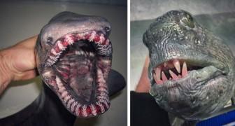 Este pescador fotografa as criaturas mais estranhas que encontra na sua rede