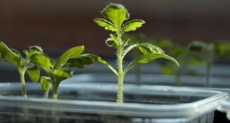 Gli scienziati scoprono che le piante hanno un cervello che decide quando devono riprodursi