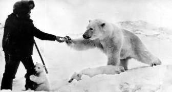 Storia di un uomo che salvò un orso polare orfano e instaurò con lui un'amicizia unica nel suo genere