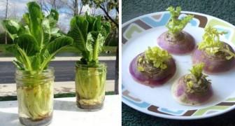 13 plantas que puedes regenerar a partir de los descartes de alimentos