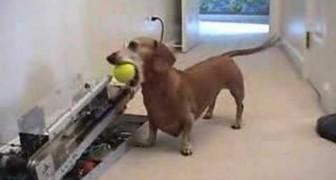 Jerry veut jouer avec la balle