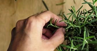 Os mosquitos são um pesadelo? Veja 8 plantas comuns que vão de ajudar a deixá-los bem longe