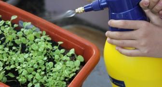 O inseticida ecológico a base de alho que vai proteger as suas plantas dos insetos