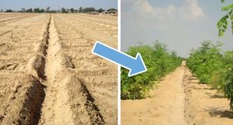 So macht man Wüstengegenden fruchtbar ohne chemische Substanzen: Diese Erfindung macht es möglich