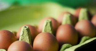Nur zwei Eier pro Woche? Falsch! Eine Studie zeigt dass man auch 12 essen kann