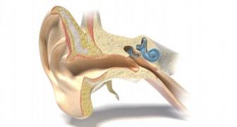 Een nieuwe ontdekking wijst in de richting van een remedie voor gehoorverlies en dit geeft miljoenen mensen weer hoop