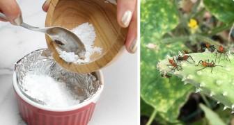 Verabschiedet euch von Chemikalien für Pflanzen und Blumen: Hier sind 13 Situationen, in denen ihr Backpulver verwenden könnt
