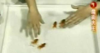 Domar peces solo es consecuencia de la paciencia japonesa