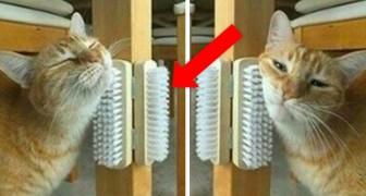 10 proyectos economicos y bricolage de copiar enseguida para hacer feliz a tu gato