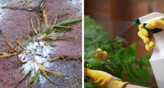 9 natural herbicides that you can prepare at home to eliminate weeds and protect your flowers