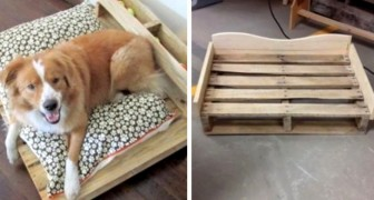 Ricavare una splendida cuccia per cane da un pallet: scopri quanto è semplice
