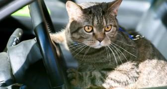 Scendono all'autogrill e lasciano il gatto in macchina: lui li chiude le portiere e li lascia fuori
