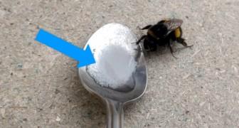 Hai trovato un'ape che non riesce a volare? Un esperto ti dice cosa devi fare per salvarle la vita