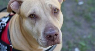 Wat je METEEN moet doen als een geleidehond naar je toekomt zonder zijn eigenaar
