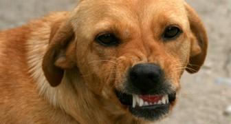 Vetenskap bekräftar att hundar kan känna igen en dålig person: så här gör de