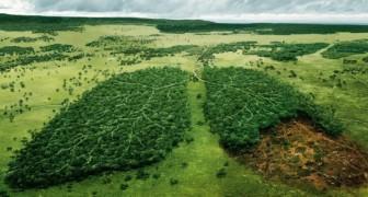 24 der einflussreichsten Werbekampagnen für die Umwelt, über die es sich zu reflektieren lohnt