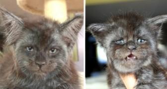 Questo gatto dal volto umano è la cosa più strana che vedrete oggi: le sue foto hanno fatto il giro del mondo