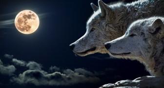 Esta história sobre 2 lobos vai mudar a maneira como você se olha no espelho todos os dias