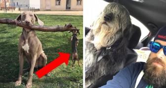 Cachorros surpreendidos em situações engraçadas: impossível não rir desta fotos
