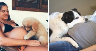 17 foto di cani e gatti che aspettano con ansia ed amore i loro futuri padroncini