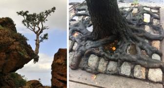 15 bomen die zich niks hebben aangetrokken van moeilijkheden en die gewoon doorgegaan zijn met groeien tegen alles en iedereen in