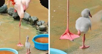 23 fotografische miniverhalen met dieren... die je hart zullen vullen met tederheid
