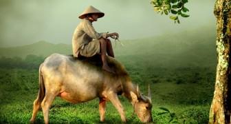 A fábula do agricultor: a história chinesa que todos deveríamos ler