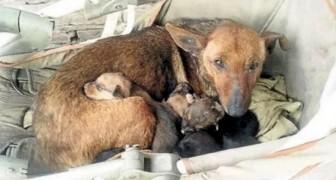 Een vrouw ziet een zwerfhond met pups: kort daarna zal ze ontdekken dat er een baby tussen verstopt zit