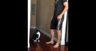 Kann das eure Katze auch? ;)