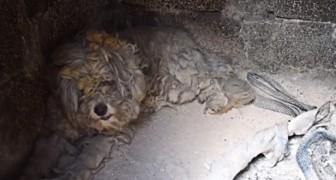 Griekenland: een doodsbange poedel redt zichzelf van de branden door zichzelf in een oven te verstoppen