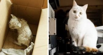 16 foto's van katten voor en na de adoptie die je hart verwarmen