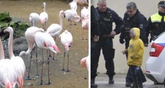 No transmitir a los niños el respeto por los animales tiene consecuencias tristisimas