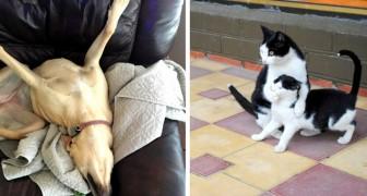 24 foto di animali talmente bizzarri che vi procureranno grasse risate
